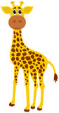 A single giraffe Stock Photo