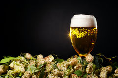 Single glass of beer with hop Royalty Free Stock Photo