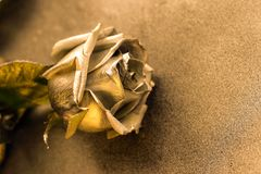 Golden rose on golden background Royalty Free Stock Photography
