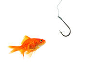 Single goldfish facing empty hook Stock Photos