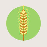 Single grain vector flat design icon Royalty Free Stock Images