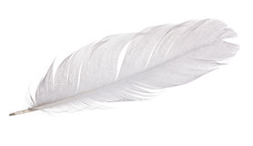 Single gray goose quill on white Stock Images