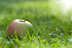 Single green apple on grass Royalty Free Stock Photos