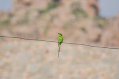 Single green bird on a wire Royalty Free Stock Photos