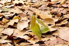 Single green bush Royalty Free Stock Image
