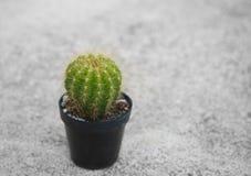 Single green cactus palnt for gardening  in plastic pot on cemen Stock Photo