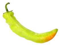 Single green fresh chilli-pepper Stock Image