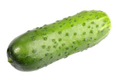 Single green fresh cucumber Royalty Free Stock Photography