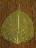 Single green leaf Royalty Free Stock Photography