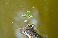 Single green leaf on dry branch in sewage Royalty Free Stock Image