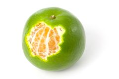 Single green Mandarin orange Royalty Free Stock Images