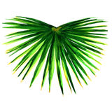 Single green palm leaf isolated. Watercolor painting on white background Stock Photography