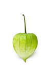 Single green physalis Stock Photo