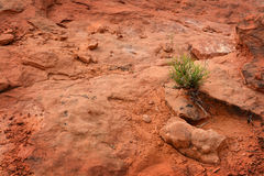 Single Green Plant in Desert Sand Heat Stock Photos