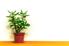 Single Green Plant and Simple Copyspace Background Royalty Free Stock Image