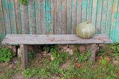 Single green pumpkin on a wooden bench. Stock Photography