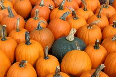 Single green squash tucked between several bright and colorful pumpkins. Closeup image of single green squash tucked between an array of bright and colorful Fall stock photography