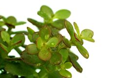 Single green succulent plant Stock Image