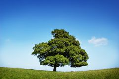 Single Green Tree Stock Photo