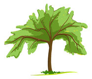 Single green tree. Vector illustration vector illustration