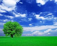 Single green tree Royalty Free Stock Images