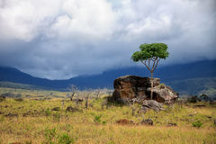 Single green tree and big rock in savanna covered with yellow gr Stock Photo