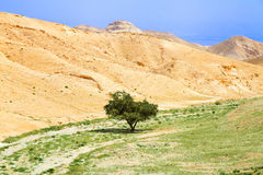 Green tree in desert - environment concept Royalty Free Stock Photo