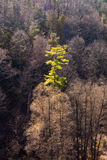 Single green tree in forest Stock Images