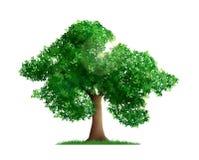 Tree Realistic Illustration
