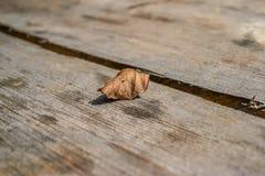 A single grey fallen leaf Royalty Free Stock Photography