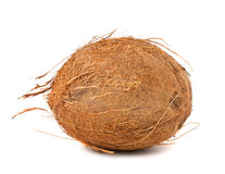 Single hairy coconut Stock Photography