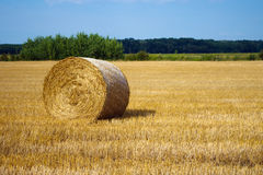 Single hay bale Stock Images