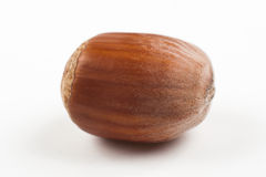 Single hazelnut Royalty Free Stock Image