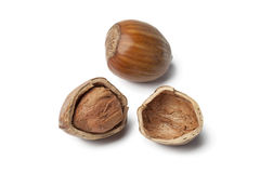 Single Hazelnut and a cracked one Stock Images