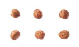 Single hazelnut isolated Stock Photo