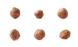 Single hazelnut isolated Stock Images