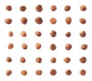Single hazelnut isolated Stock Photos