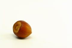 Single Hazelnut Stock Image