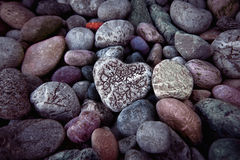 Single  heart on black pebble stones Royalty Free Stock Photography
