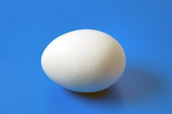 Single hen egg close-up on blue background Stock Image