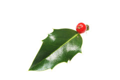 Single holly leaf. And berry isolated on white Stock Image