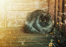 Single homeless cat. Royalty Free Stock Images