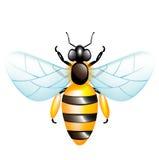 Single honey bee royalty free stock photo