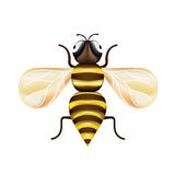 Single honey bee isolated on white Stock Photo