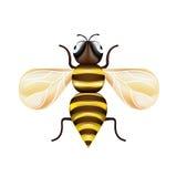 Single honey bee isolated on white Stock Photo