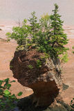 Single Hopewell Rock during low tide Stock Photography