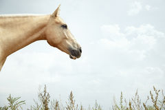 Single horse Royalty Free Stock Images