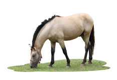 Single horse eat some grasses Stock Images