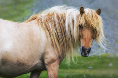 Single horse on medow Stock Photos