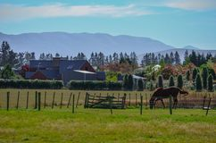Single horse on a ranch in New Zealand royalty free stock photos
